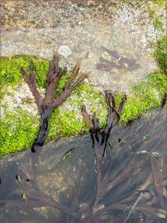 http://in-errances.blog.lemonde.fr/files/2015/09/paysage-marin.jpg