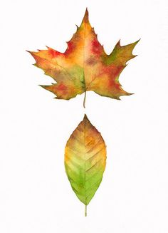 Maple and Beech Leaves -print of original watercolor