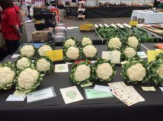 Lots of lovely cauliflower @HarrogateFlower