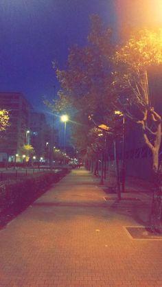 #camino #Solitario #Arbol #Luz