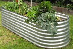 Image result for zincalume garden beds