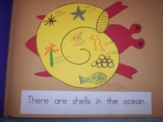 shells in the ocean