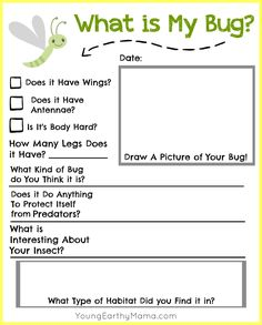 Our last few printables have done so awesome on the site, that I made a new one for FREE! It's an insect identification printable made just for little ones. Nature Science, Outdoor fun, free printable. Have fun and happy hunting!
