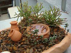 como fazer um mini jardim com suculentas - Pesquisa Google