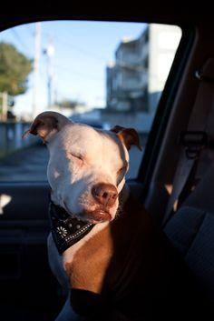 Karina S Dog Grooming Boarding