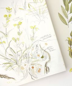 Angie Lewin sketches ~ I never tire of looking at these Nature Journal, Journal Art, Flower Sketches, Art Sketches, Angie Lewin, Illustration Children, Artist Sketchbook, Sketch Books, Nature Drawing