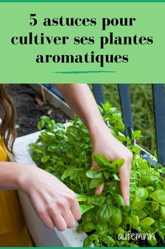 5 astuces pour cultiver vos plantes aromatiques To give flavor to all your recipes and spice up your dishes, we give you 5 tips for cultivating your aromatic plants. Garden Planters, Herb Garden, Container Gardening, Gardening Tips, Strawberry Planters, Terrarium Plants, Plantation, Growing Vegetables, Growing Herbs