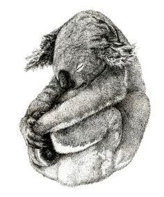 Artist: Dan Vuletici; Ink, 2011, Painting Koga #Art #Koala #AnimalArt