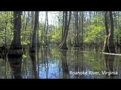 Fred and Loucille Dahmer Caddo Lake Preserve | The Nature Conservancy