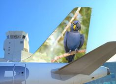 Frontier Airlines 'Animal audition reel' with animal mascot Polly the Hyacinth Macaw on the tail.