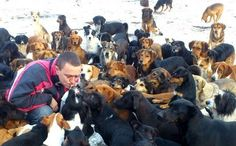 Dog Catchers to Swarm Beloved Free-Roaming Sanctuary on Christmas