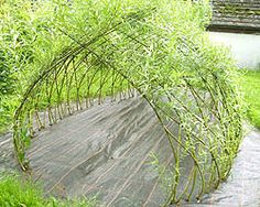 Living Willow Structures freaking awesome i want this!