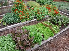 What to plant in June (late summer crops) & July, August (Fall crops)