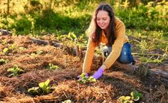 Permaculture: Sustainable Landscaping That Benefits You And Nature | Care2 Healthy Living