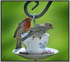 I like this, water in the cup, seed on the saucer. Would have to refill a lot, but pretty and practical.