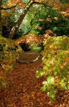 Westonbirt Arboretum by wrcous, via Flickr