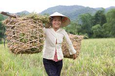 A través del uso de tecnologías innovadoras en la agricultura vietnamita, hemos ayudado a que pequeños agricultores pobres puedan aumentar sus cosechas de arroz un 25% y, así, mejorar sus condiciones de vida. ¡Ya hemos llegado a 103.000 familias! :)