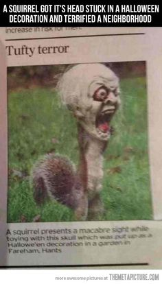 Squirrel got its head stuck in a Halloween decoration and terrified a neighborhood...ahahahahahaha