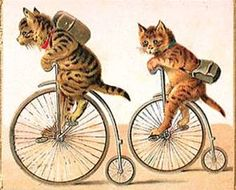Bicycle riding cats. What can I say! Just sorta silly and cute. Early 1900's postcard.