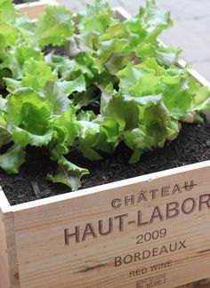 Portable vegetable garden using wine crates