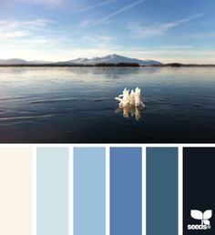 nature blues, by design seeds Colour Pallette, Colour Schemes, Color Patterns, Color Combos, Colors Of The World, Design Seeds, Delft, Winter Typ, Inspiration Design