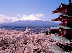 Paisajes   Cerezos Japoneses