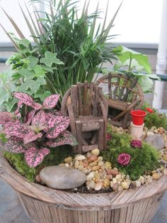 Miniature Fairy Gardens Plants | Plants, Flowers and Such: Fairy Gardening