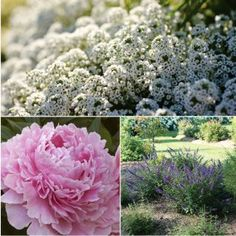 These sweetly scented plants add another level of enjoyment to...
