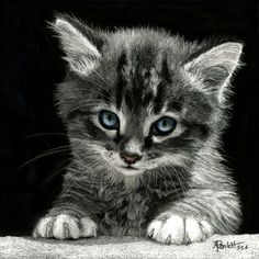 """""""Bright Future"""" Black Scratchboard and Colored Ink, x (from rescue photo) Baby Kittens, Kittens Cutest, Cats And Kittens, Cute Cats, Cute Baby Animals, Animals And Pets, Kitten Drawing, Domestic Cat, Beautiful Cats"""