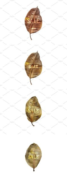 Banner Template, Flyer Template, Sale Flyer, Banner Design, Minimalist Design, Autumn Leaves, Templates, Lettering, Personalized Items