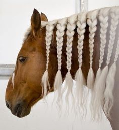 beautifully braided horse