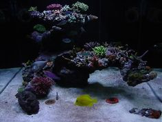 Bonsai Tree inspired Aquascape - Reef Central Online Community