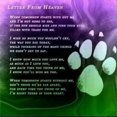 Dog Quotes, Animal Quotes, Animal Poems, Pet Poems, Letter From Heaven, Pet Loss Grief, Pet Remembrance, Dog Memorial, Memorial Poems
