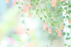 甘い瞬間 Pastel Flowers, Wild Flowers, Beautiful Flowers, Aesthetic Themes, Flower Aesthetic, Flower Images, Flower Photos, Flower Wallpaper, Wallpaper Backgrounds