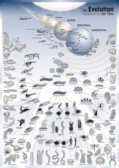 El concepto de Árbol de la vida ha sido utilizado en biología, religión, filosofía y mitología. Un árbol de la vida es un motivo común en diversas teologías mundiales, mitologías, y filosofías. Alu…
