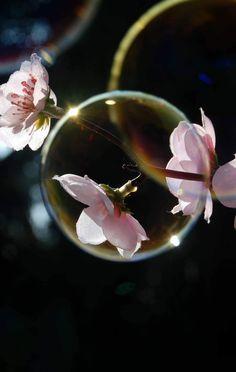 Bubble & Flower « Stchua's Weblog