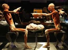 museum of bodies - Google Search