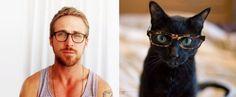 ライアン・ゴズリング VS 猫