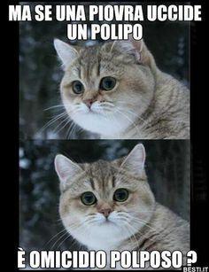 funny dog memes humor \ funny dog memes + funny dog memes hilarious + funny dog memes humor + funny dog memes videos + funny dog memes puppies + funny dog memes hilarious laughing + funny dog memes with captions + funny dog memes hilarious humor
