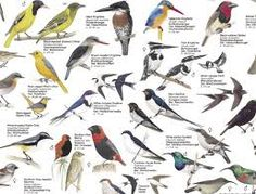 Image result for birds of south africa South Africa, Birds, Christmas, Image, Yule, Xmas, Bird, Christmas Movies, Noel