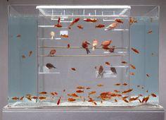 Bird cage   fish tank combo.