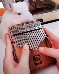Geek Discover Hey loversthis Kalimba is absolutely amazing Absolutely wonderful instrument Pop up different melody Kalimba Instruments Cute Animals Animals And Pets Cool Things To Buy Stuff To Buy Funny Animal Videos Clever Inventions Cool Stuff Cute Little Animals, Cute Funny Animals, Instruments, Kalimba, Piano Music, Cute Kittens, Cool Things To Buy, Stuff To Buy, Animal Memes