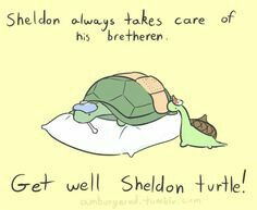 Sheldon is taking care of a fellow turtle