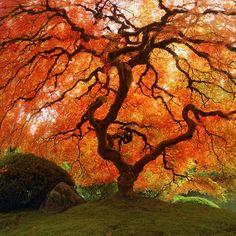 Autumn Zen - Fall Japanese Maple 16 x 16 Fine Art Photo - Archival Print