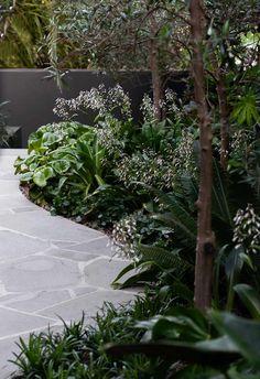 Lush Garden, Tropical Garden, Shade Garden, Outdoor Paving, Outdoor Gardens, Front Gardens, Australian Garden Design, California Garden, Coastal Gardens