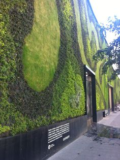 Muro Verde Cd. De Mexico |Pinned from PinTo for iPad|