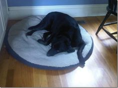**COURTESY POST FOR A LOCAL FAMILY.  THIS DOG IS NOT ASSOCIATED WITH THE IPSWICH HUMANE GROUP.**Peanut is a female black lab, approx. 8 years old.  She has been with the same family since being adopted from a rescue shelter at about 1 year of age. ...