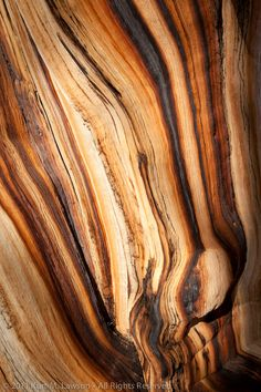If this wood could talk Tree Patterns, Wood Patterns, Patterns In Nature, Textures Patterns, Art Grunge, Bristlecone Pine, Natural Structures, Principles Of Design, Wooden Textures