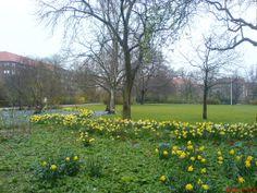 Lindevangs Park, Frederiksberg