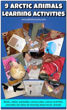 9 Arctic animals learning activities, including books, videos, science experiments, sensory play, and more! Love all these ideas for studying the Arctic and polar regions!    Gift of Curiosity